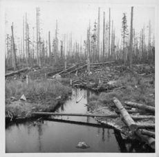 Trees in the forest somwhere in Finland were destroyed after the war, 1941.