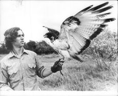 """Robert Kennedy Jr. With a hawk during the recordings of the television series """"The Last Frontier"""""""