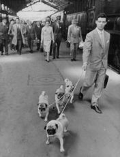 Behind the man with the dogs are The Duchess and the Duke of Windsor walking along the train station in Paris