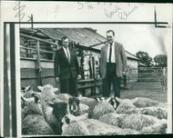 Viscount William Whitelaw inspecting sheep at his farm