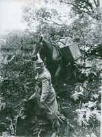 Horse wagon battery in action in the garden. Horse knight in foul ground