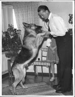 Police Dog Boy is a work colleague and 'playmate' to police officer Kjell Lundgren.