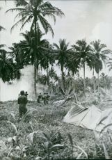 American forces on Rendova Island in the Central Solomons dynamite trees to clear the way for a 155 mm.
