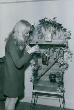 Woman admiring domestic birds in cage.