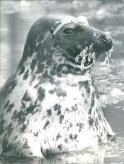 Seal in water.