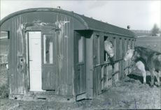 View of a horse box. 1978