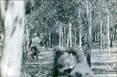 Soldiers having a battle in the forest. 1964