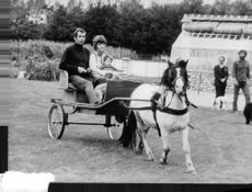 Roger Vadim sitting on cart with an animal.