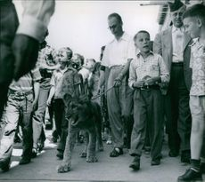 Man walking with captive lion cub, people following them.