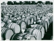 Salt marshes stored in oak barrels in long lines