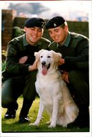 Army Dogs with Cpls McCourt and Starkie.