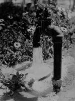 A faucet water running with flowers at the background. 21 May 1964