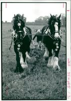 All England horse ploughing.
