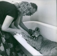 A man and  a woman looking at a lion in bath tub.