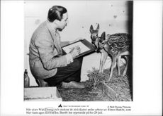 Walt Disney is studying the little animals during the work of the movie Bambi.