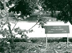 "Raoul Wallenberg's newly planted tree in ""The Righteous Allies"" outside the Holocaust Museum Yad Vashem in Jerusalem."