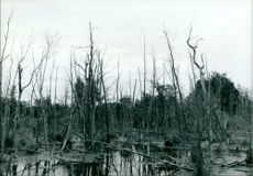 A forest in northern new york state that has been destroyed by Acid rain.