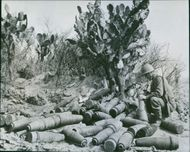 Shells abandoned by Germans in Tunisia, 1950.