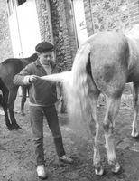 A boy checks horse tail.