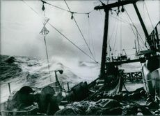 View of East German fishing fleet.