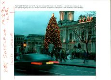 The famous christmas tree at belfast city hall.