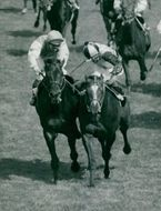 Ernie Johnson at Rheingold and Lester Piggott at Roberto fight for the victory in derby