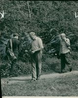 looking for a lost Ball during the parliamentary golf handicap at walton heath.