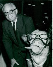 Senator Barry Goldwater poses with calves to make themselves popular with farmers in Portland