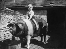 Peter Mark Andrew Phillips (son) of Prinsessan-Anne, sitting on a pig.
