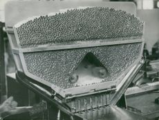 Cigarette manufacturing and packaging at the Tobacco Monopoly factory