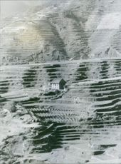 Photo of a single house in the centre of a man-made land terraces in Nepal.