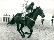 Princess Anne in the Spring National Hunt Flat race.