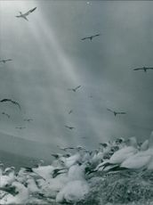 Flock of birds on cliff while many of them flying.